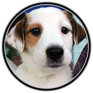 cf6ce8f9 DC PAWS Rescue – dogs, cats animal rescue in Washington DC focus on ...