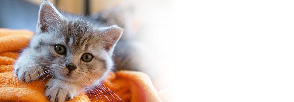 british cat names